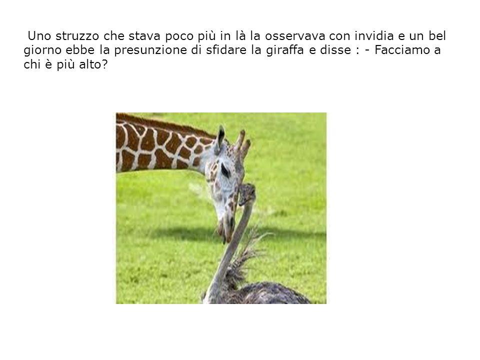 La giraffa accettò e i due si confrontarono, ovviamente la giraffa era più alta di ben dieci spanne.