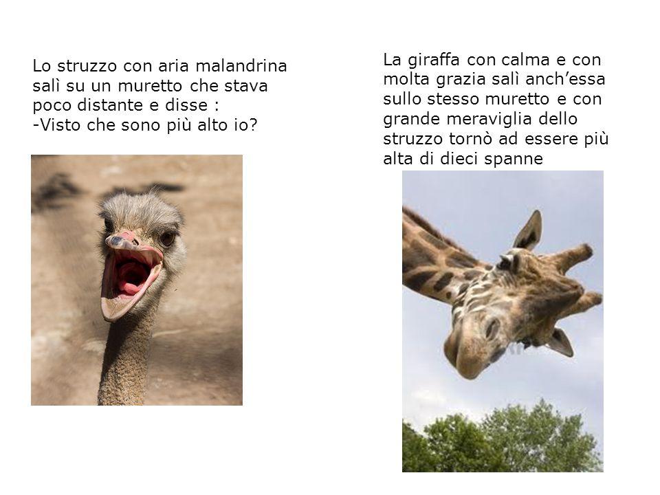 Poi scesero dal muretto ma la situazione non cambiò, la giraffa restava sempre di ben dieci spanne più alta.