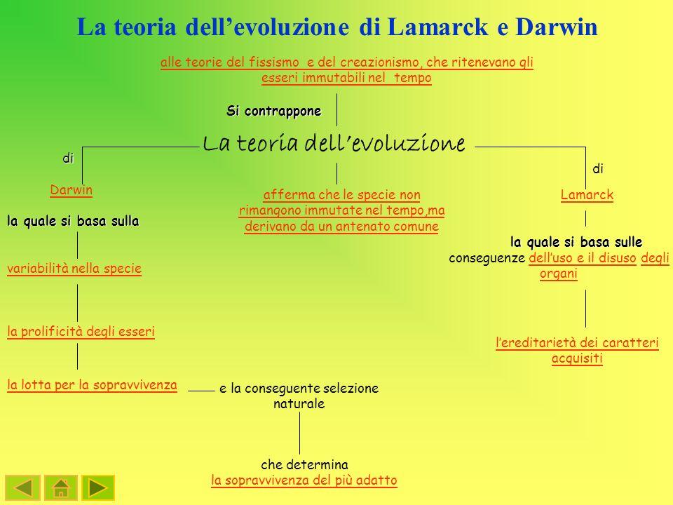 La teoria dellevoluzione di Lamarck e Darwin variabilità nella specie La teoria dellevoluzione Darwin Lamarckdi la quale si basa sulla la prolificità