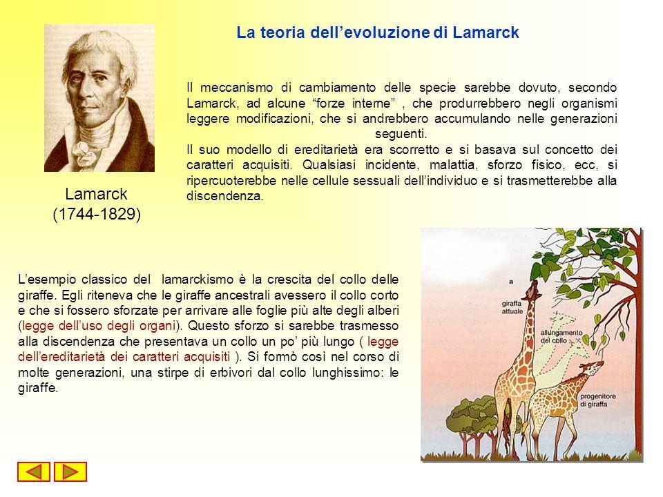 Lesempio classico del lamarckismo è la crescita del collo delle giraffe. Egli riteneva che le giraffe ancestrali avessero il collo corto e che si foss