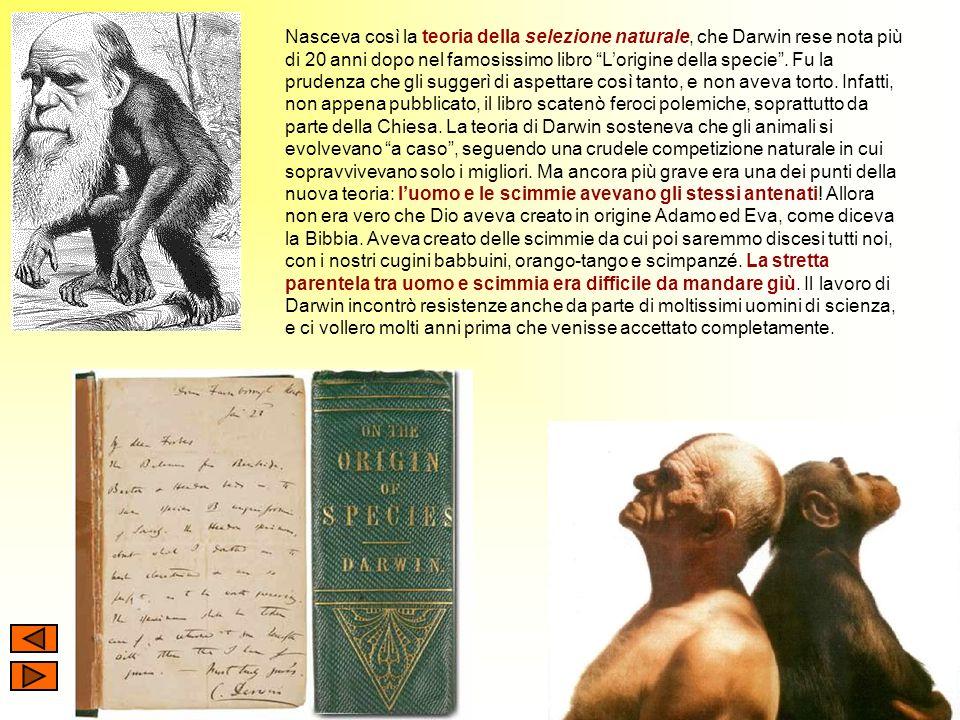 Nasceva così la teoria della selezione naturale, che Darwin rese nota più di 20 anni dopo nel famosissimo libro Lorigine della specie. Fu la prudenza