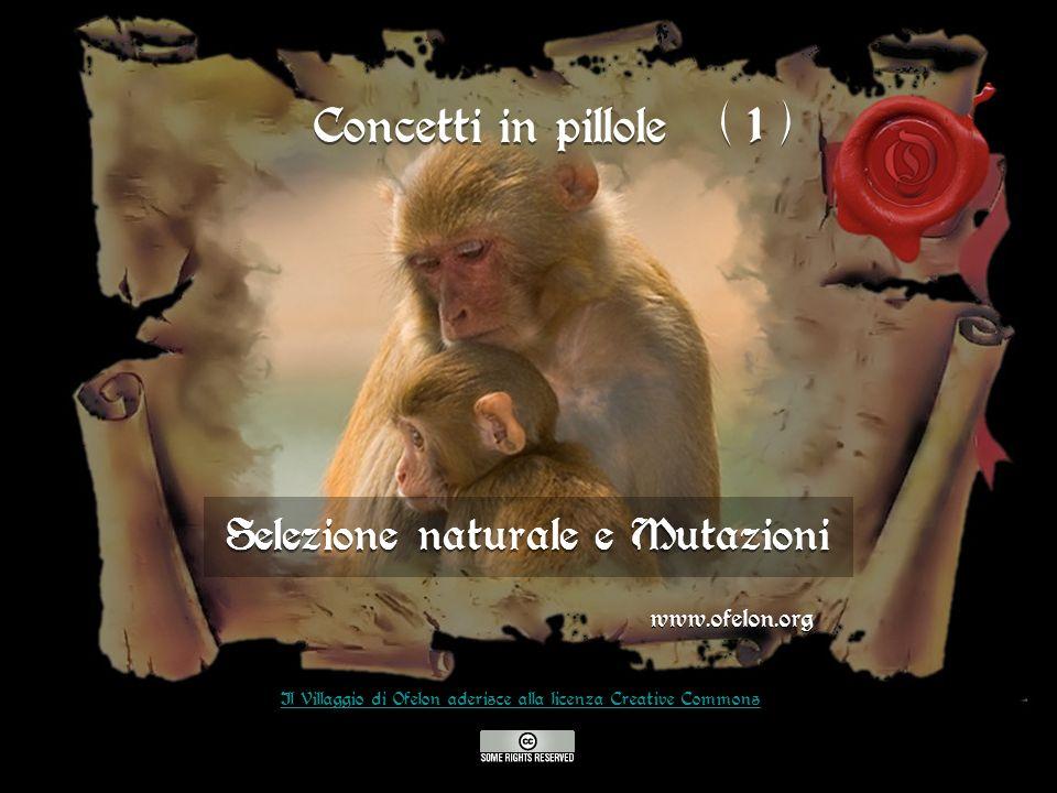 Selezione naturale e Mutazioni www.ofelon.org Il Villaggio di Ofelon aderisce alla licenza Creative Commons Concetti in pillole ( 1 )