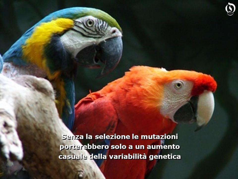 Senza la selezione le mutazioni porterebbero solo a un aumento casuale della variabilità genetica Senza la selezione le mutazioni porterebbero solo a