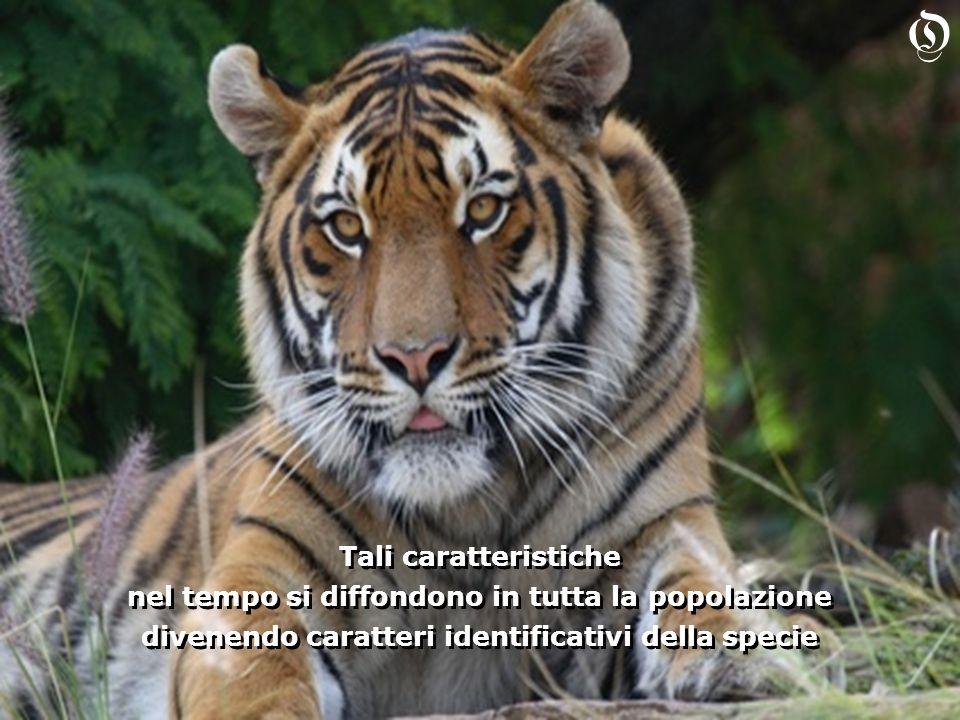 Tali caratteristiche nel tempo si diffondono in tutta la popolazione divenendo caratteri identificativi della specie Tali caratteristiche nel tempo si