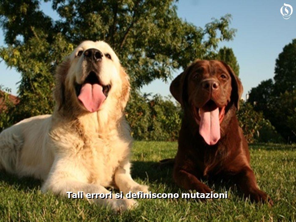 Selezione e mutazioni sono i due pilastri dellevoluzione delle specie Selezione e mutazioni sono i due pilastri dellevoluzione delle specie O