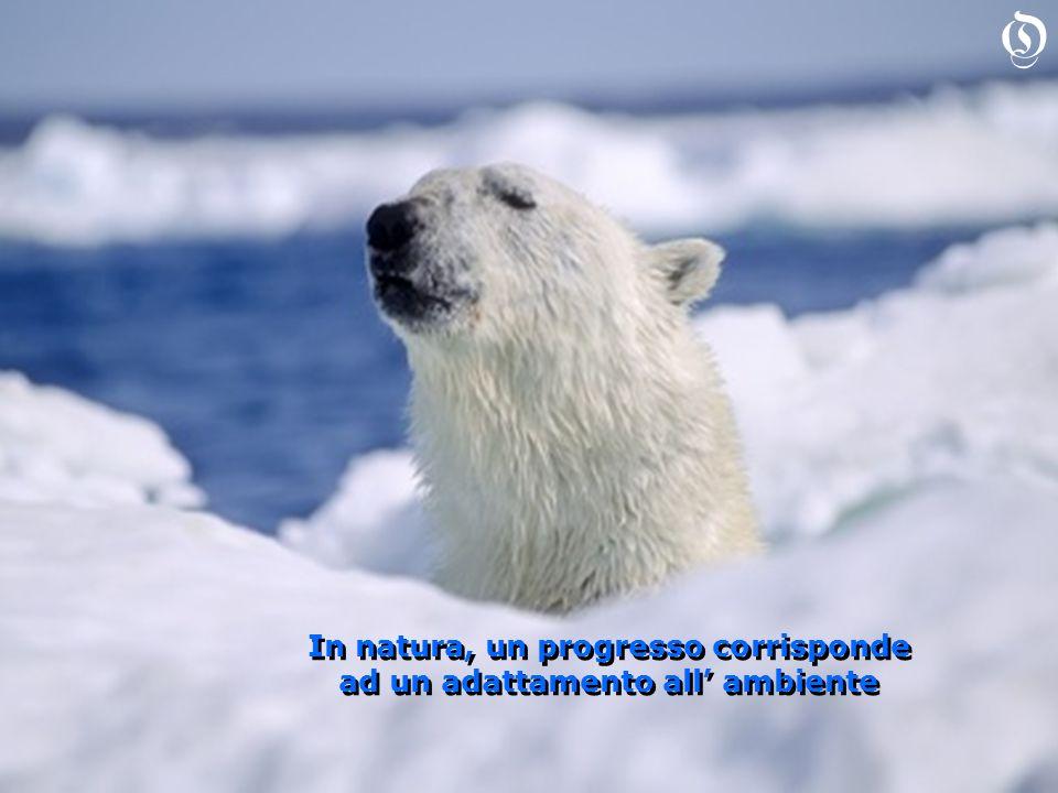 In natura, un progresso corrisponde ad un adattamento all ambiente In natura, un progresso corrisponde ad un adattamento all ambiente O