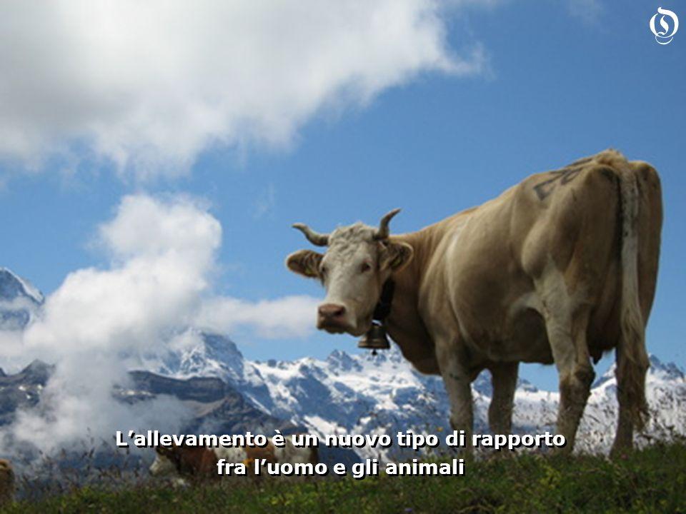 Lallevamento è un nuovo tipo di rapporto fra luomo e gli animali Lallevamento è un nuovo tipo di rapporto fra luomo e gli animali O