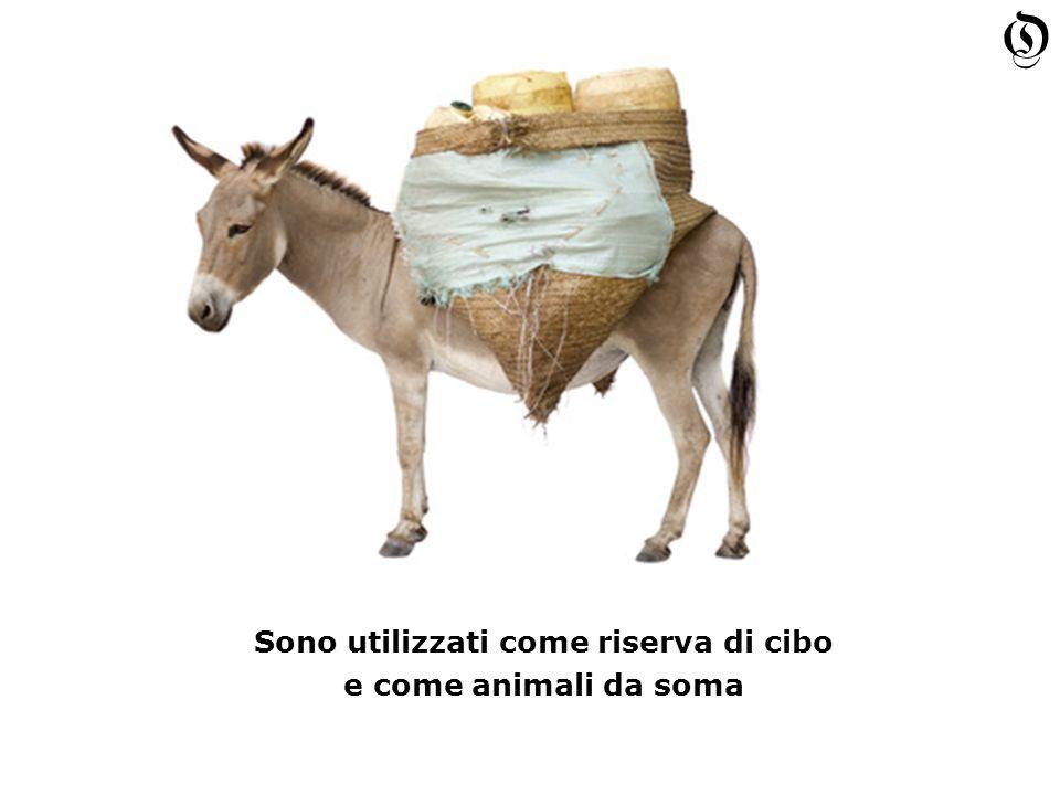 Sono utilizzati come riserva di cibo e come animali da soma Sono utilizzati come riserva di cibo e come animali da soma O