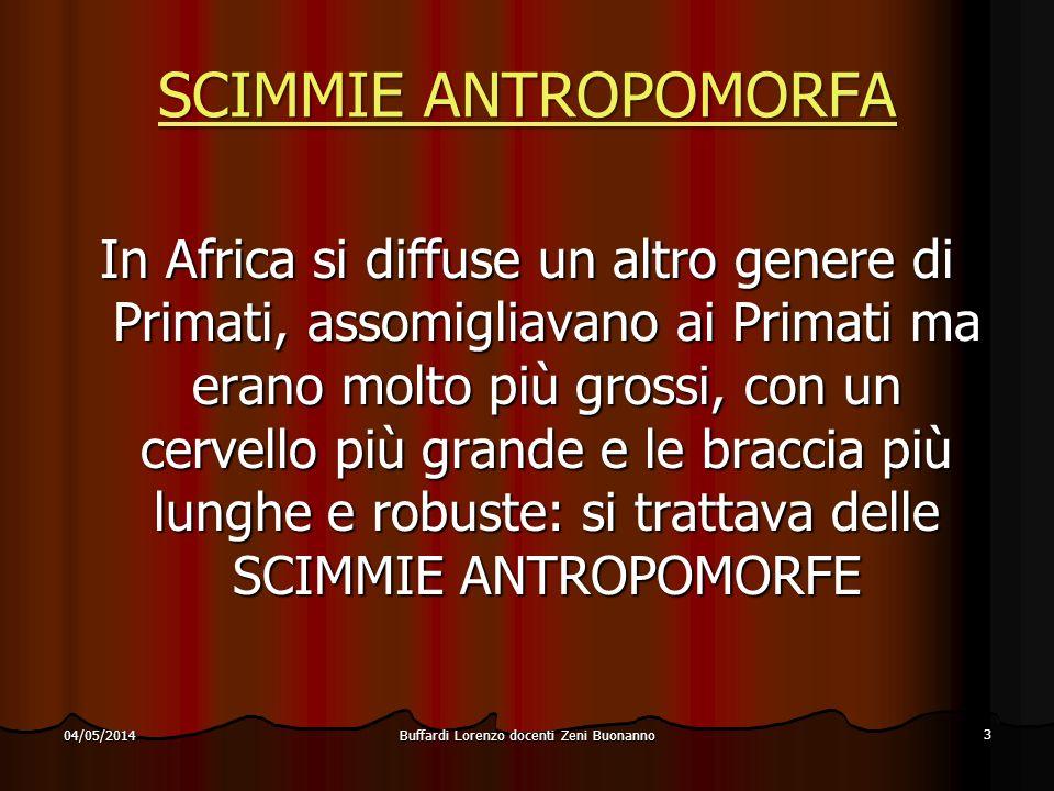 Buffardi Lorenzo docenti Zeni Buonanno 3 04/05/2014 SCIMMIE ANTROPOMORFA SCIMMIE ANTROPOMORFA In Africa si diffuse un altro genere di Primati, assomig