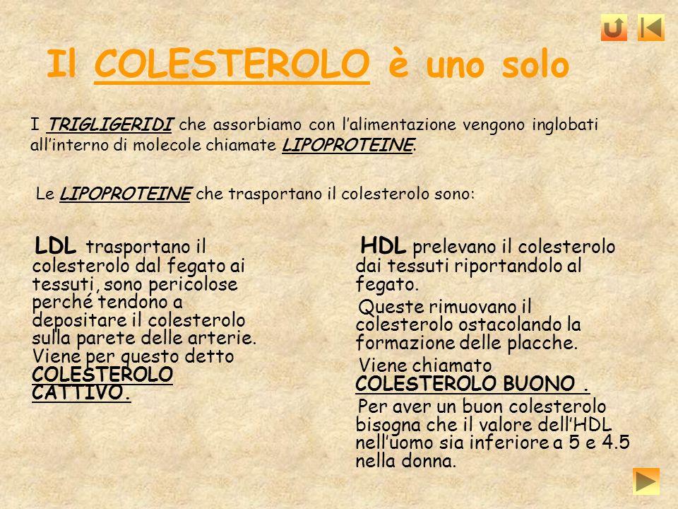 Il COLESTEROLO è uno solo LDL trasportano il colesterolo dal fegato ai tessuti, sono pericolose perché tendono a depositare il colesterolo sulla paret