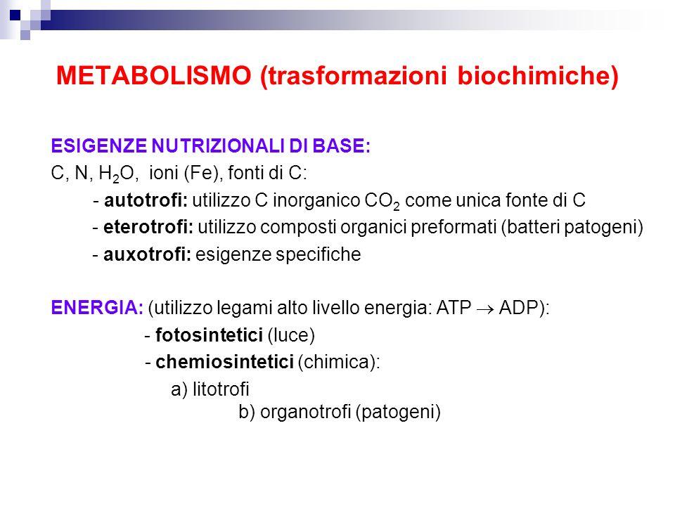 METABOLISMO (trasformazioni biochimiche) ESIGENZE NUTRIZIONALI DI BASE: C, N, H 2 O, ioni (Fe), fonti di C: - autotrofi: utilizzo C inorganico CO 2 co