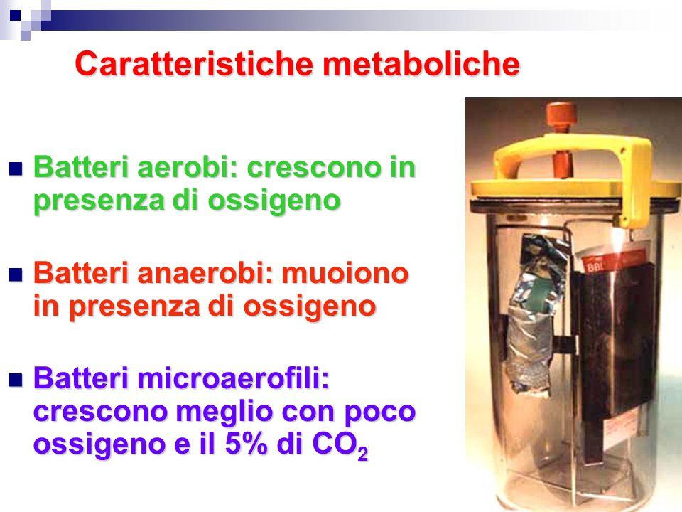 Caratteristiche metaboliche Batteri aerobi: crescono in presenza di ossigeno Batteri aerobi: crescono in presenza di ossigeno Batteri anaerobi: muoion