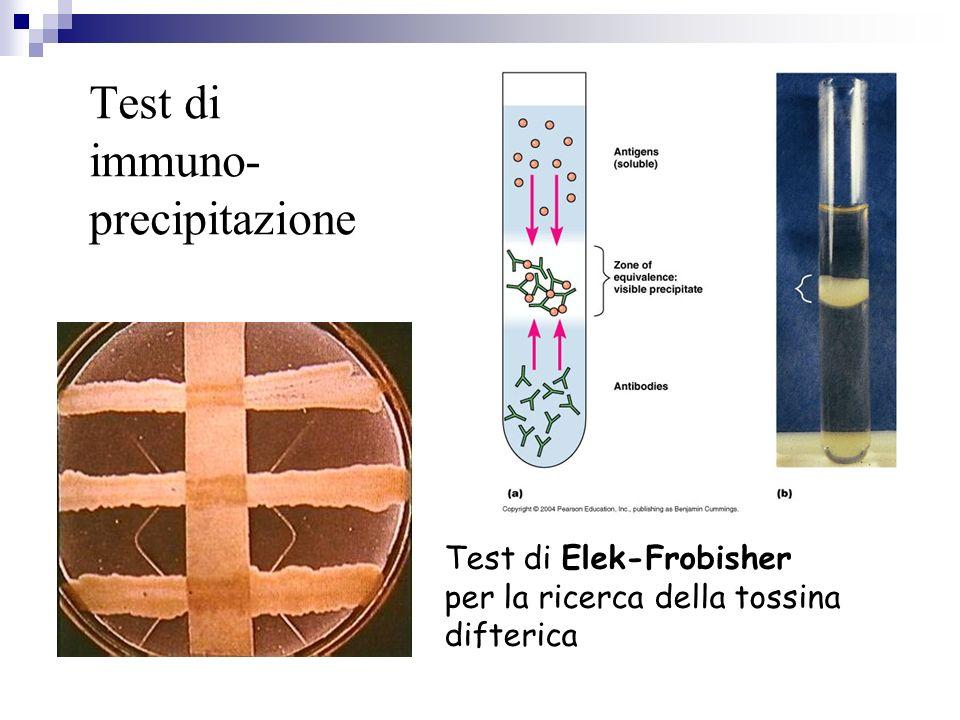 Test di immuno- precipitazione Test di Elek-Frobisher per la ricerca della tossina difterica