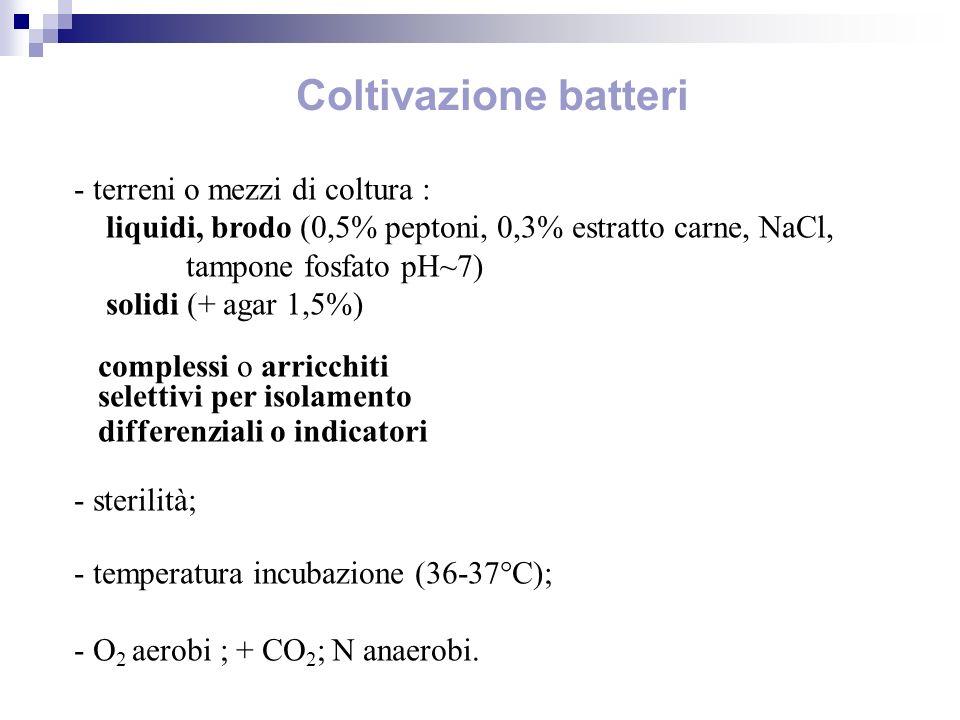 Coltivazione batteri - terreni o mezzi di coltura : liquidi, brodo (0,5% peptoni, 0,3% estratto carne, NaCl, tampone fosfato pH~7) solidi (+ agar 1,5%