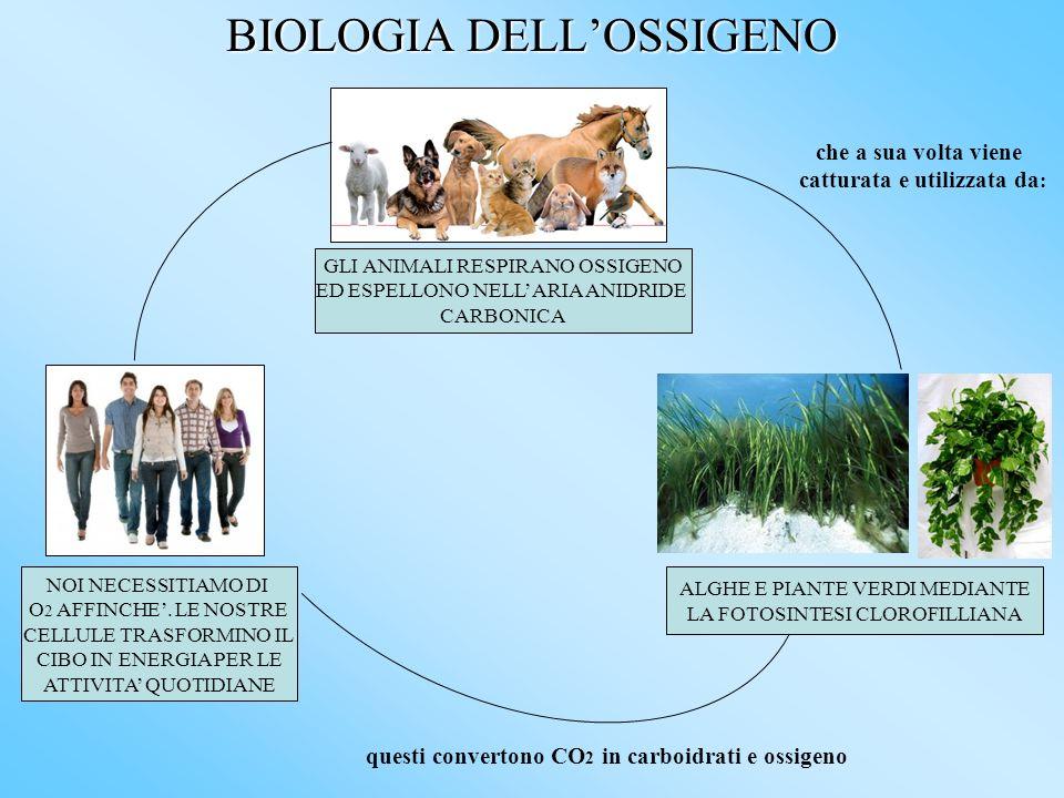BIOLOGIA DELLOSSIGENO GLI ANIMALI RESPIRANO OSSIGENO ED ESPELLONO NELLARIA ANIDRIDE CARBONICA che a sua volta viene catturata e utilizzata da : ALGHE