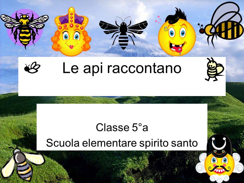 Le api raccontano Classe 5°a Scuola elementare spirito santo