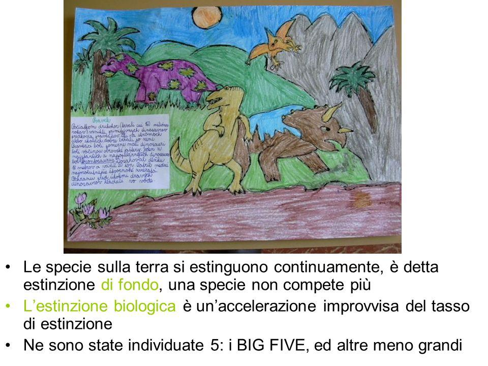 Le specie sulla terra si estinguono continuamente, è detta estinzione di fondo, una specie non compete più Lestinzione biologica è unaccelerazione imp