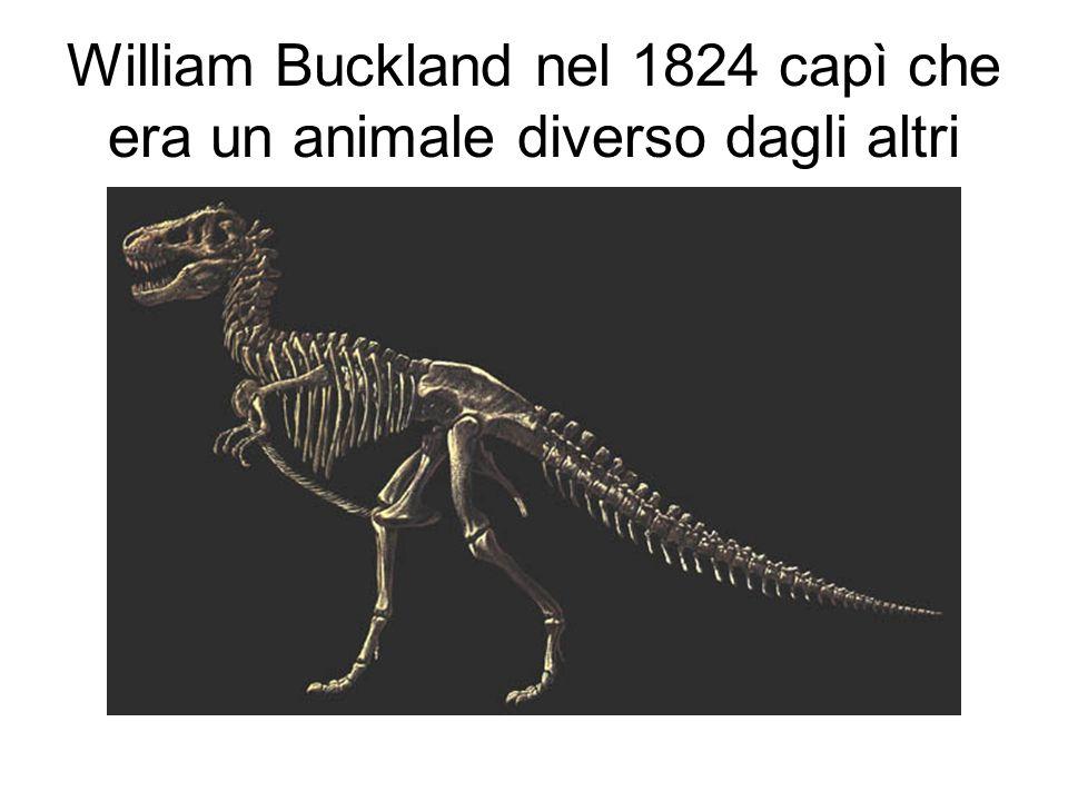 William Buckland nel 1824 capì che era un animale diverso dagli altri