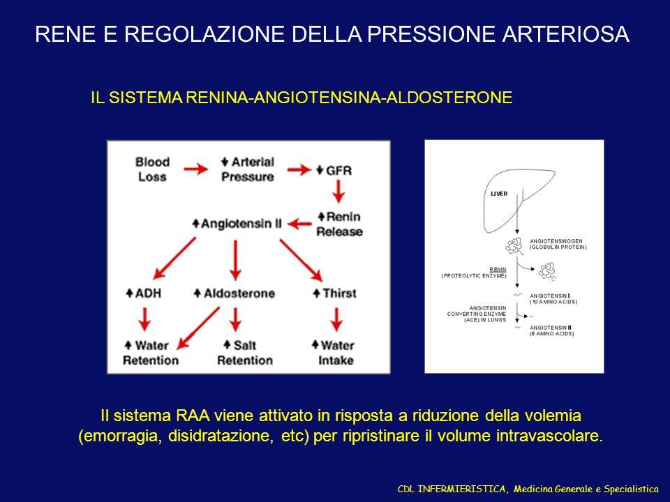 RENE E REGOLAZIONE DELLA PRESSIONE ARTERIOSA IL SISTEMA RENINA-ANGIOTENSINA-ALDOSTERONE Il sistema RAA viene attivato in risposta a riduzione della vo