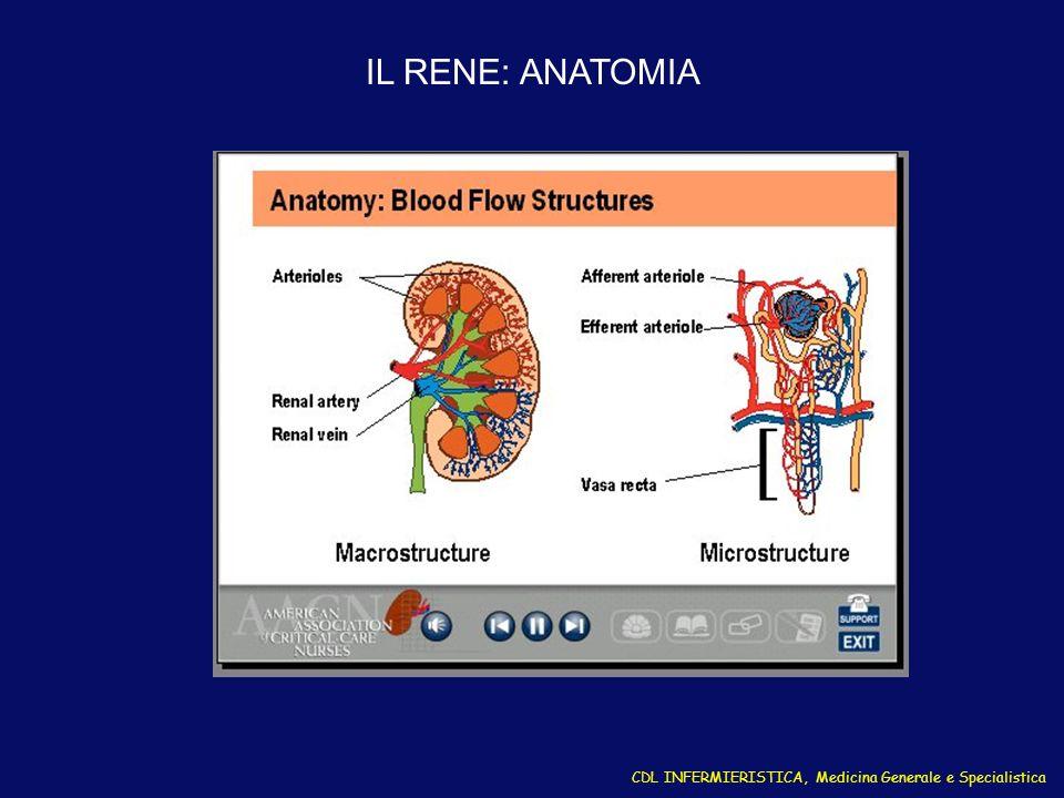 CDL INFERMIERISTICA, Medicina Generale e Specialistica IL RENE: STRUTTURA DEL NEFRONE