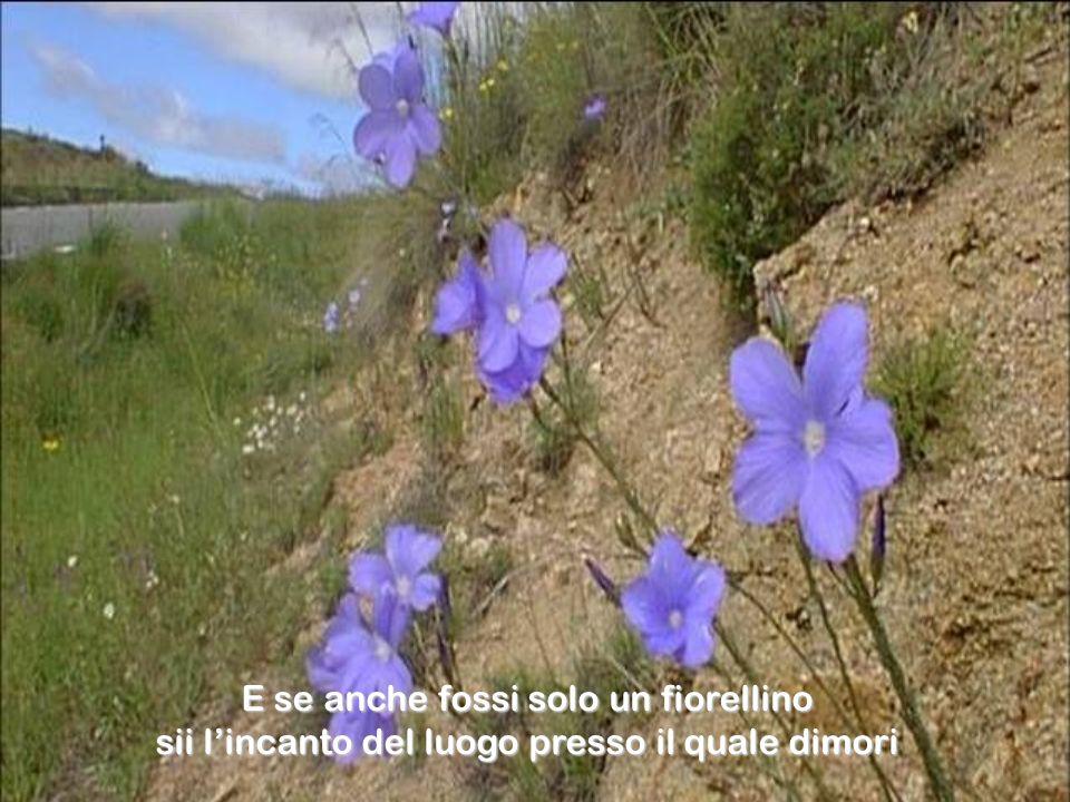 E se anche fossi solo un fiorellino sii lincanto del luogo presso il quale dimori