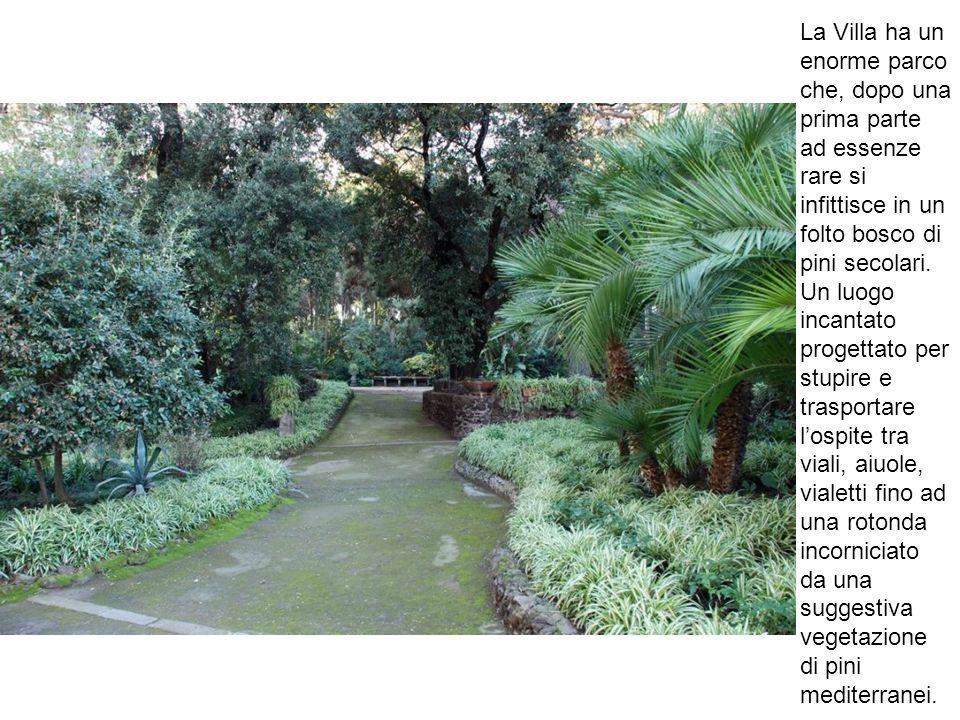 La Villa ha un enorme parco che, dopo una prima parte ad essenze rare si infittisce in un folto bosco di pini secolari. Un luogo incantato progettato
