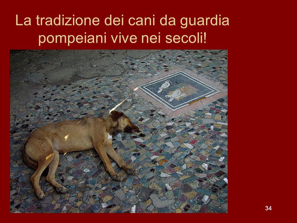 34 La tradizione dei cani da guardia pompeiani vive nei secoli!