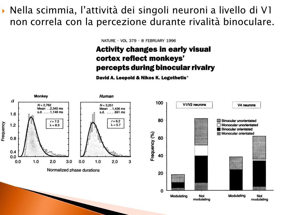 Nella scimmia, lattività dei singoli neuroni a livello di V1 non correla con la percezione durante rivalità binoculare.