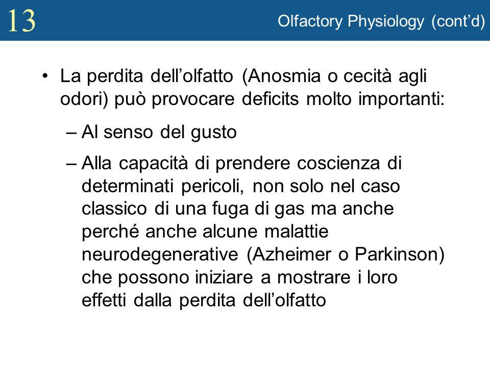 13 Olfactory Physiology (contd) La perdita dellolfatto (Anosmia o cecità agli odori) può provocare deficits molto importanti: –Al senso del gusto –All
