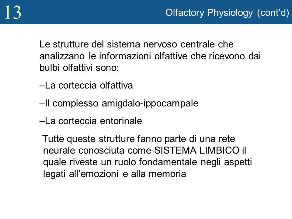 13 Olfactory Physiology (contd) Le strutture del sistema nervoso centrale che analizzano le informazioni olfattive che ricevono dai bulbi olfattivi so