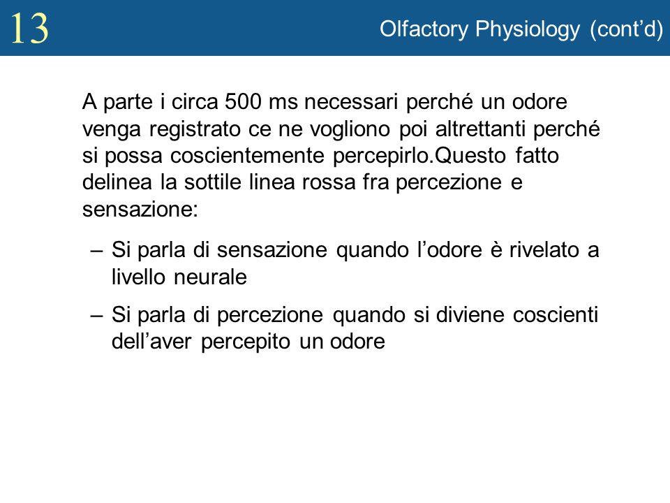 13 Olfactory Physiology (contd) A parte i circa 500 ms necessari perché un odore venga registrato ce ne vogliono poi altrettanti perché si possa cosci