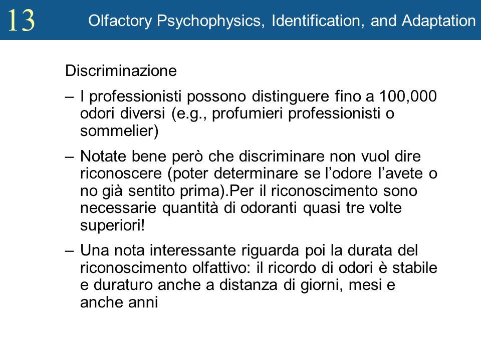 13 Olfactory Psychophysics, Identification, and Adaptation Discriminazione –I professionisti possono distinguere fino a 100,000 odori diversi (e.g., p