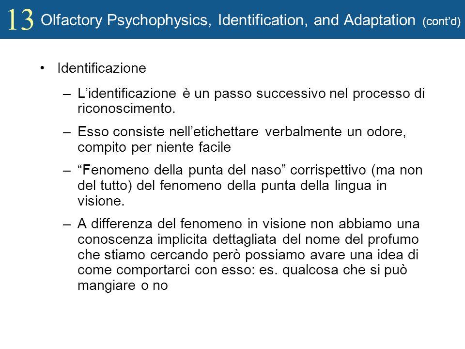 13 Olfactory Psychophysics, Identification, and Adaptation (contd) Identificazione –Lidentificazione è un passo successivo nel processo di riconoscime