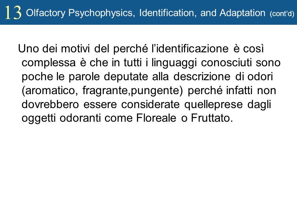 13 Olfactory Psychophysics, Identification, and Adaptation (contd) Uno dei motivi del perché lidentificazione è così complessa è che in tutti i lingua