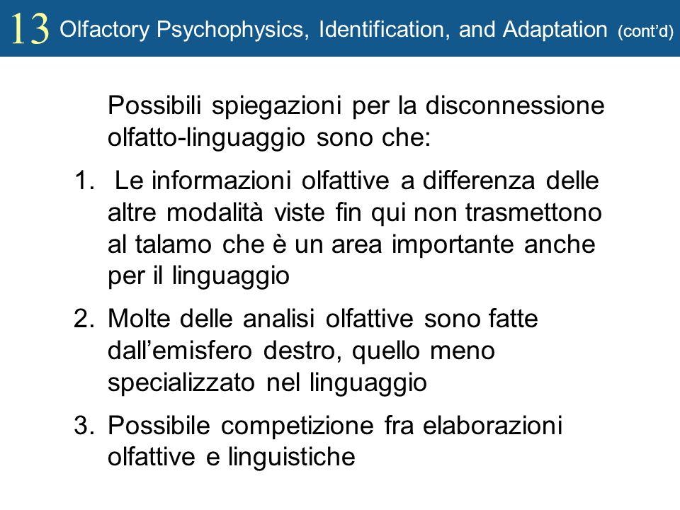 13 Olfactory Psychophysics, Identification, and Adaptation (contd) Possibili spiegazioni per la disconnessione olfatto-linguaggio sono che: 1. Le info