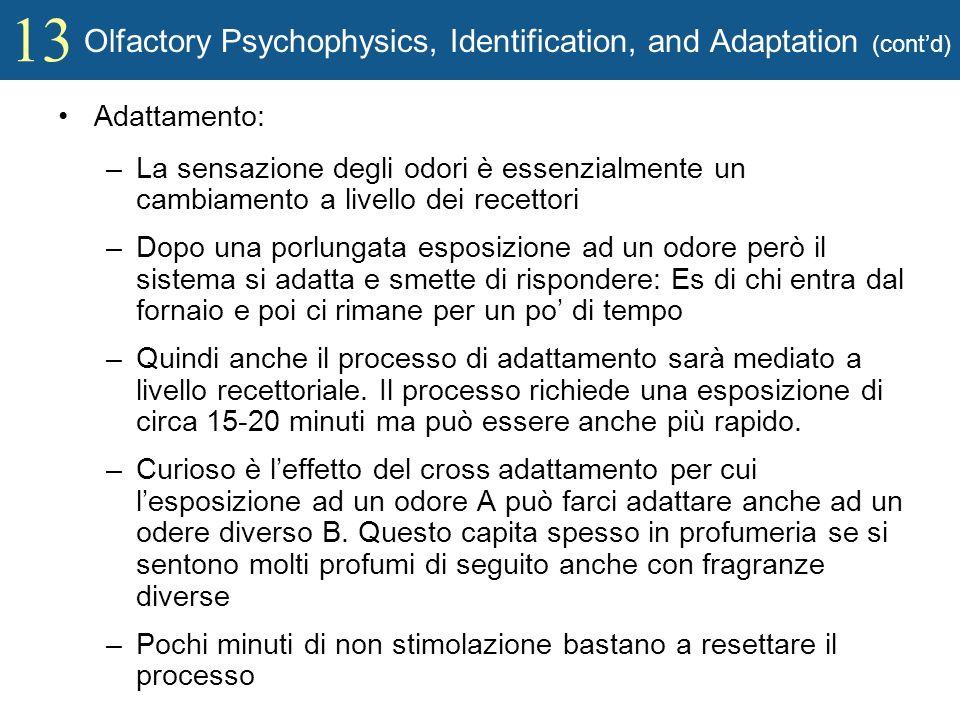 13 Olfactory Psychophysics, Identification, and Adaptation (contd) Adattamento: –La sensazione degli odori è essenzialmente un cambiamento a livello d