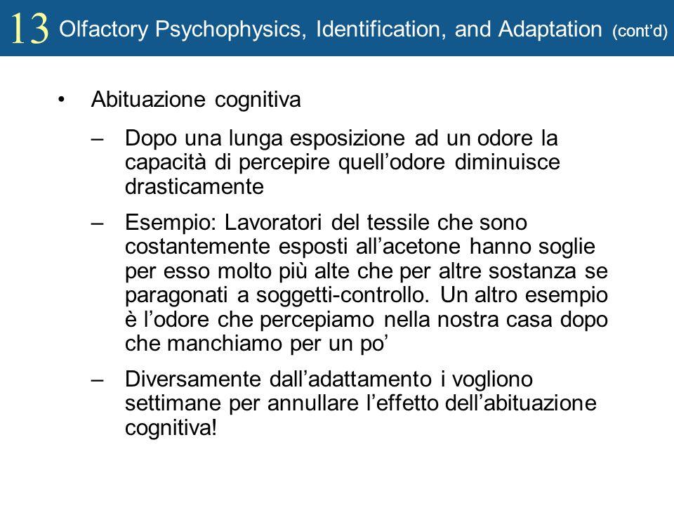 13 Olfactory Psychophysics, Identification, and Adaptation (contd) Abituazione cognitiva –Dopo una lunga esposizione ad un odore la capacità di percep