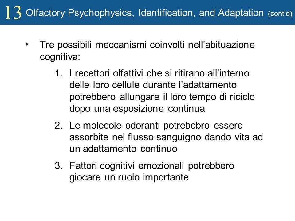 13 Olfactory Psychophysics, Identification, and Adaptation (contd) Tre possibili meccanismi coinvolti nellabituazione cognitiva: 1.I recettori olfatti
