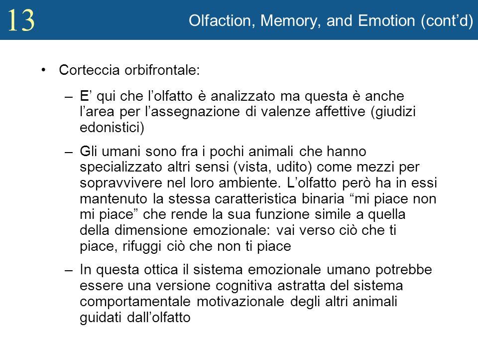 13 Olfaction, Memory, and Emotion (contd) Corteccia orbifrontale: –E qui che lolfatto è analizzato ma questa è anche larea per lassegnazione di valenz