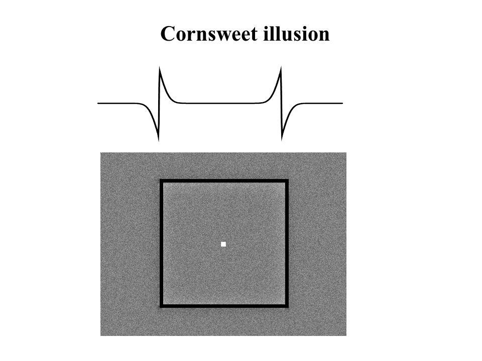 Cornsweet illusion