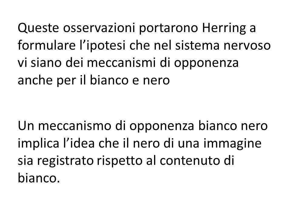 Queste osservazioni portarono Herring a formulare lipotesi che nel sistema nervoso vi siano dei meccanismi di opponenza anche per il bianco e nero Un meccanismo di opponenza bianco nero implica lidea che il nero di una immagine sia registrato rispetto al contenuto di bianco.