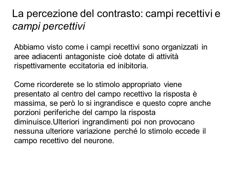 La percezione del contrasto: campi recettivi e campi percettivi Abbiamo visto come i campi recettivi sono organizzati in aree adiacenti antagoniste cioè dotate di attività rispettivamente eccitatoria ed inibitoria.