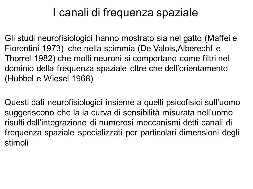 Gli studi neurofisiologici hanno mostrato sia nel gatto (Maffei e Fiorentini 1973) che nella scimmia (De Valois,Alberecht e Thorrel 1982) che molti neuroni si comportano come filtri nel dominio della frequenza spaziale oltre che dellorientamento (Hubbel e Wiesel 1968) I canali di frequenza spaziale Questi dati neurofisiologici insieme a quelli psicofisici sulluomo suggeriscono che la la curva di sensibilità misurata nelluomo risulti dallintegrazione di numerosi meccanismi detti canali di frequenza spaziale specializzati per particolari dimensioni degli stimoli