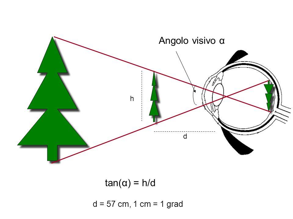 Angolo visivo α tan(α) = h/d d d = 57 cm, 1 cm = 1 grad h