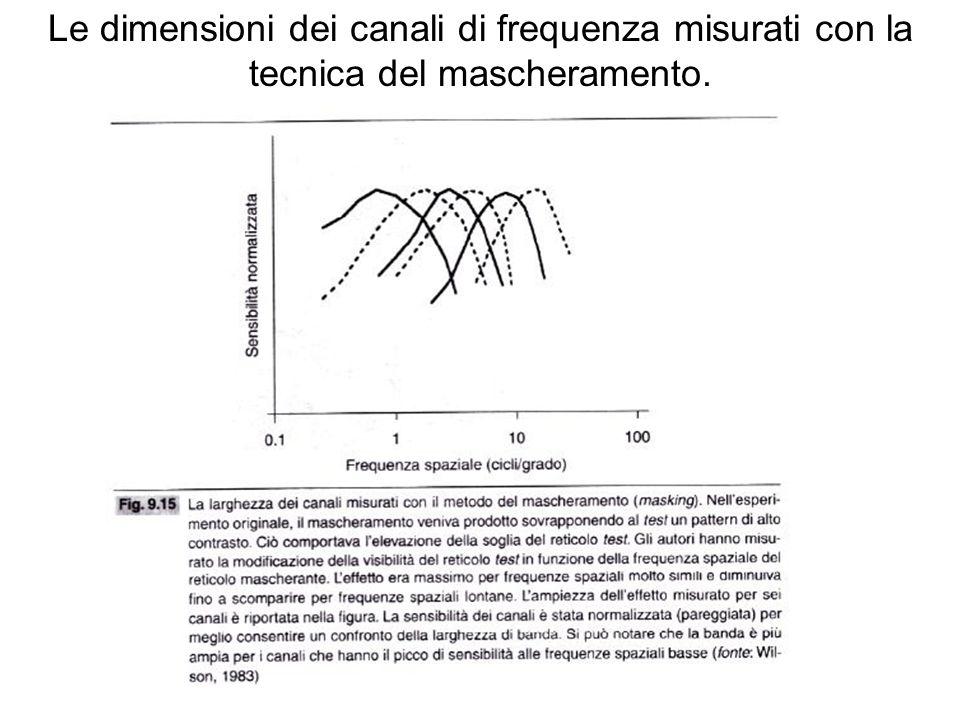 Le dimensioni dei canali di frequenza misurati con la tecnica del mascheramento.