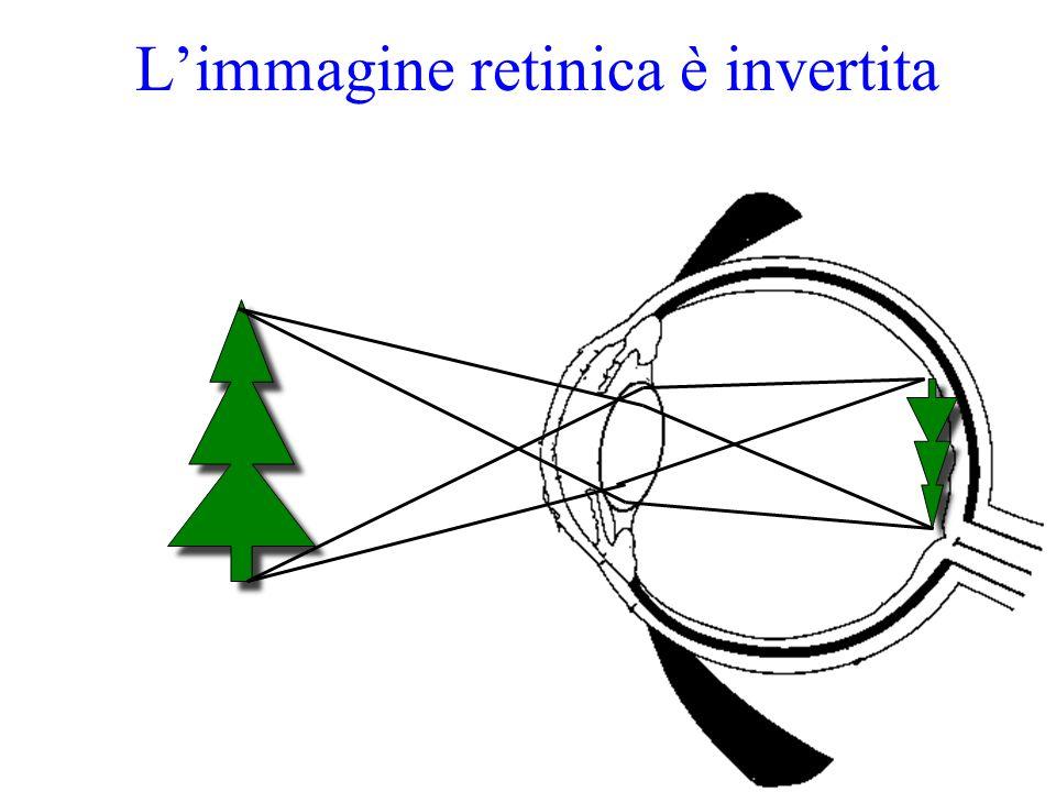 Limmagine retinica è invertita
