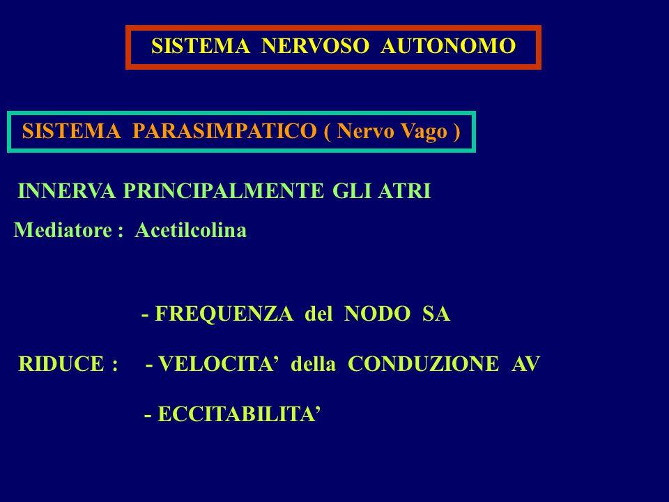 SISTEMA NERVOSO AUTONOMO SISTEMA PARASIMPATICO ( Nervo Vago ) INNERVA PRINCIPALMENTE GLI ATRI - FREQUENZA del NODO SA - VELOCITA della CONDUZIONE AV -