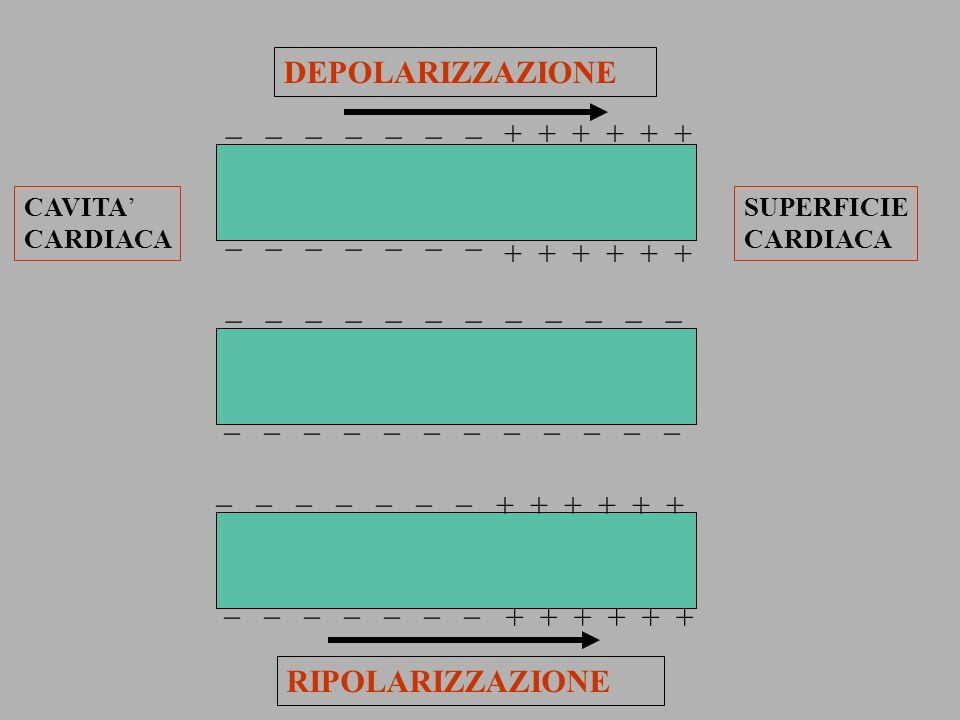 _ _ _ _ _ _ _ + + + _ _ _ _ _ _ _ + + + _ _ _ _ _ _ _ + + + + + + _ _ _ _ _ _ DEPOLARIZZAZIONE RIPOLARIZZAZIONE + + + CAVITA CARDIACA SUPERFICIE CARDI