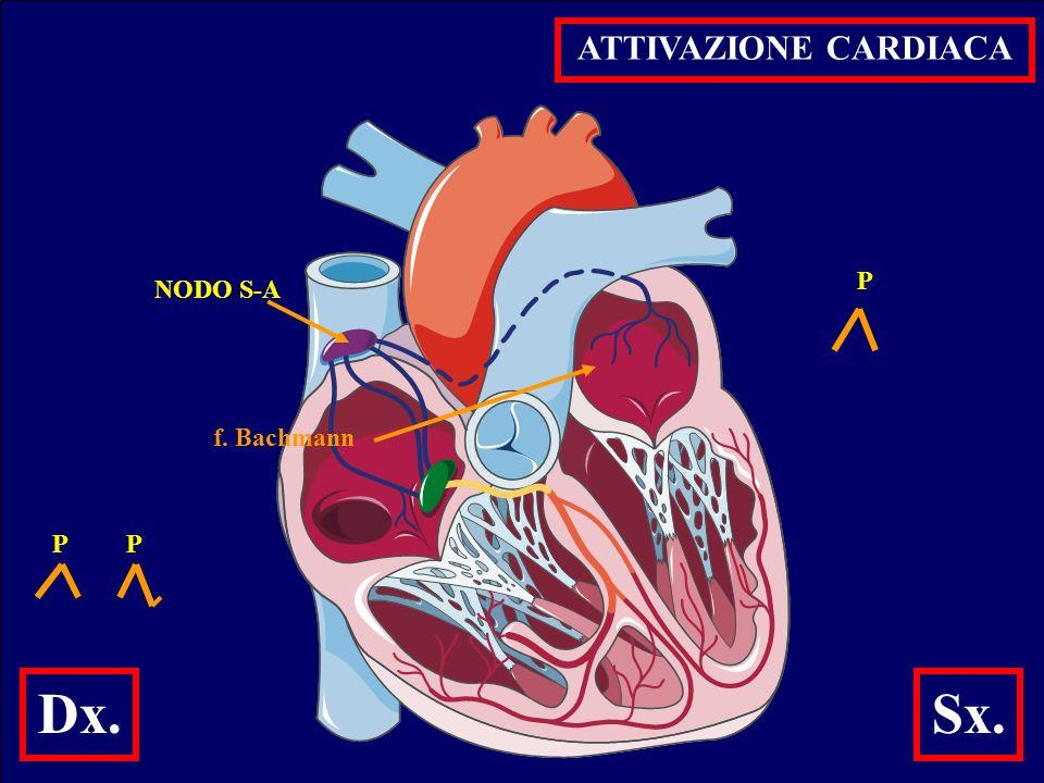ANALISI ECG - RITMO ( presenza onde P ) - FREQUENZA ( ritmo regolare .