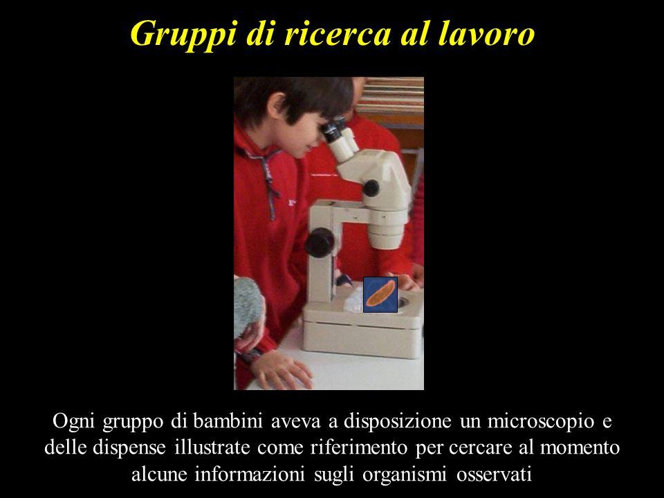 Gruppi di ricerca al lavoro Ogni gruppo di bambini aveva a disposizione un microscopio e delle dispense illustrate come riferimento per cercare al mom